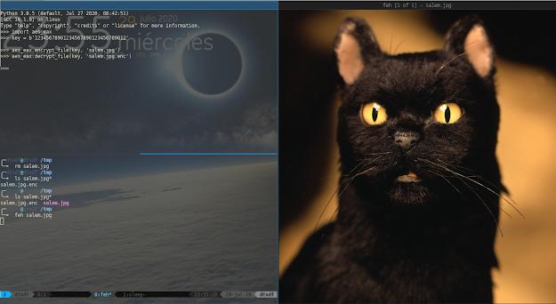 Imagen del gato de salem desencriptada y luego mostrada